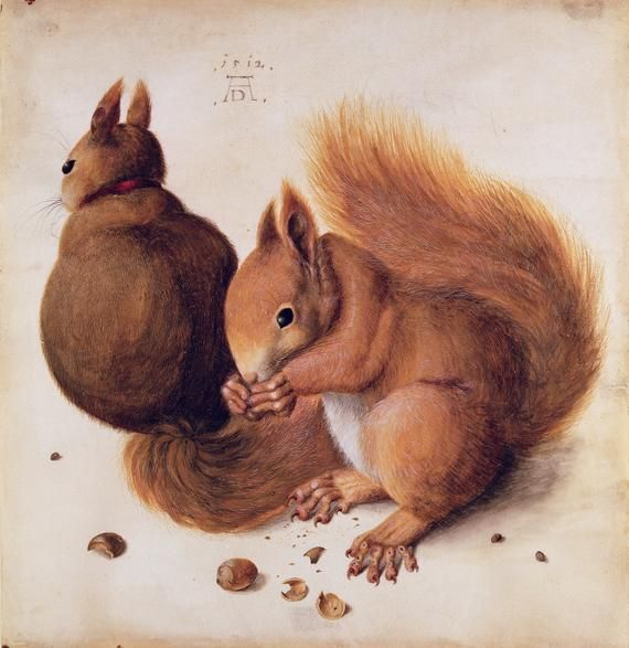 Albrecht Durer, Squirrels, 151, definitely my favorite out of all of them, these squirrels are perfectly drawn, great detail. Love it
