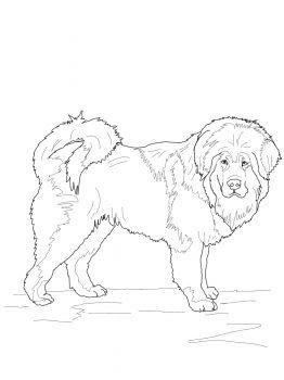 Tibetan Mastiff Favorite Dog Colouring Pages Pinterest