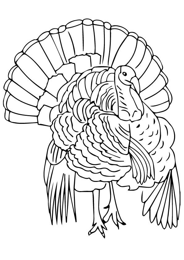 thanksgiving coloring pages and themes - photo#20