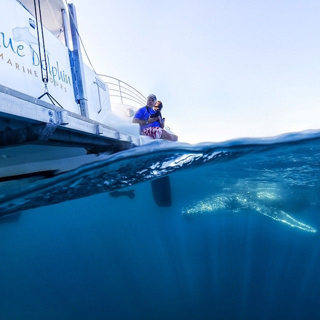 Some friendly action just below the surface at Hervey Bay on a Blue Dolphin tour #thisisqueensland by @markseabury