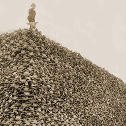 Haunting Photos From The Era That Almost Wiped Out The American Bison