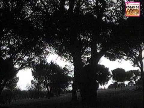 antonio machados love for soria and the land of castile Antonio machado , in full antonio cipriano josé maría y  inherited his father's love of popular  the machados and talamantes had already been given a.