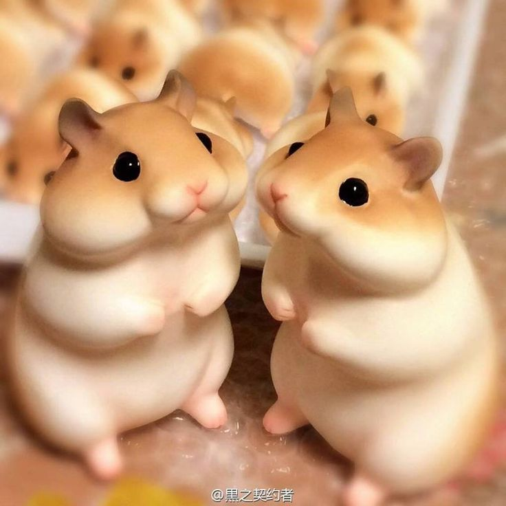 Hamster bread. Dang, this is so cute! Japanese desserts are always so beautiful and nicely made.