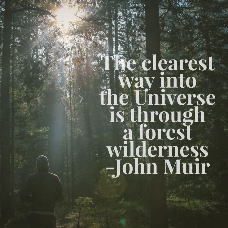 Forest Quotes: Best 25+ Forest Quotes Ideas On Pinterest