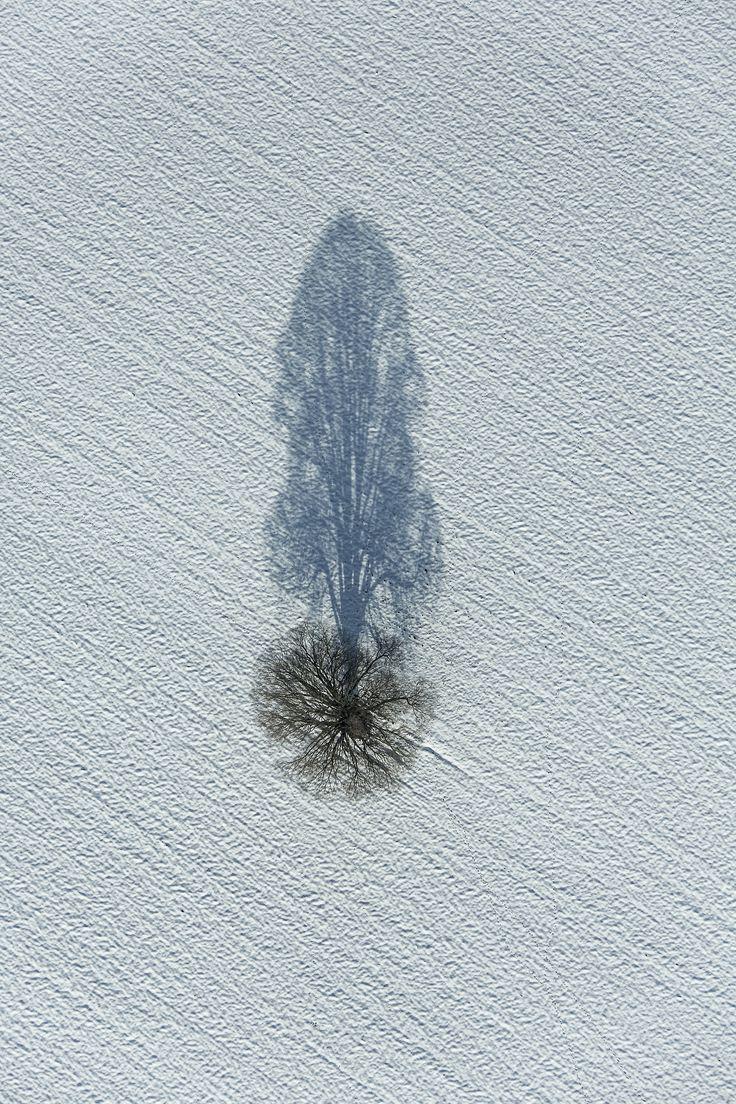 Shadow Tree | byKlaus Leidorf.