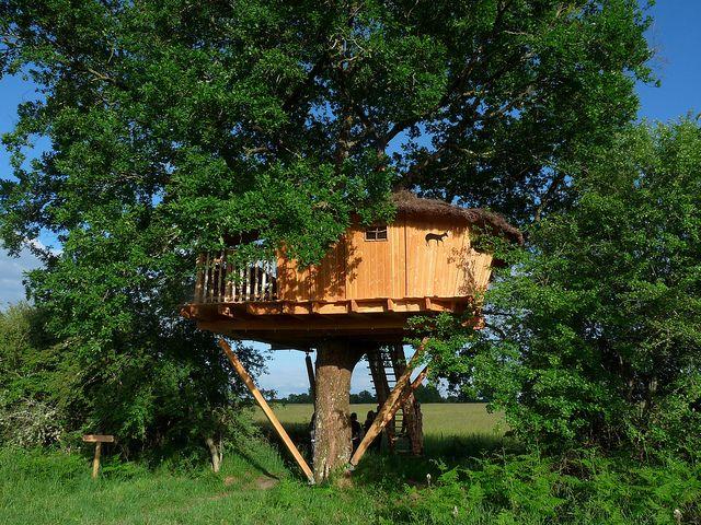 Cabane dans les arbres en #Berry