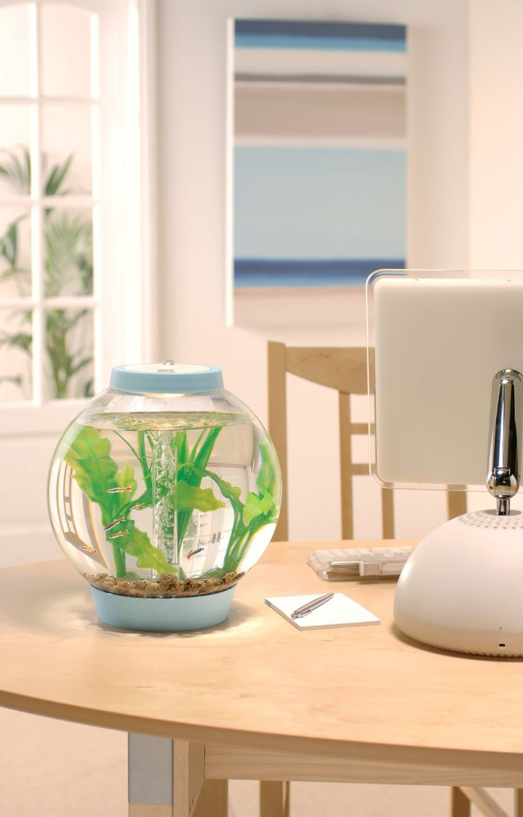 With A Capacity Of The Small And Perfectly Formed Classic Baby BiOrb Has  The Same Filtration System As The Other Reef One Aquariums And Comes With  ...