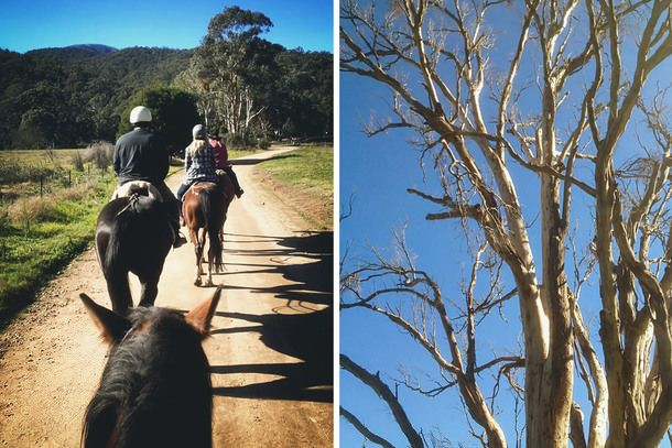 Ride a horse to lunch at Victoria's High Country (A Table For Two)