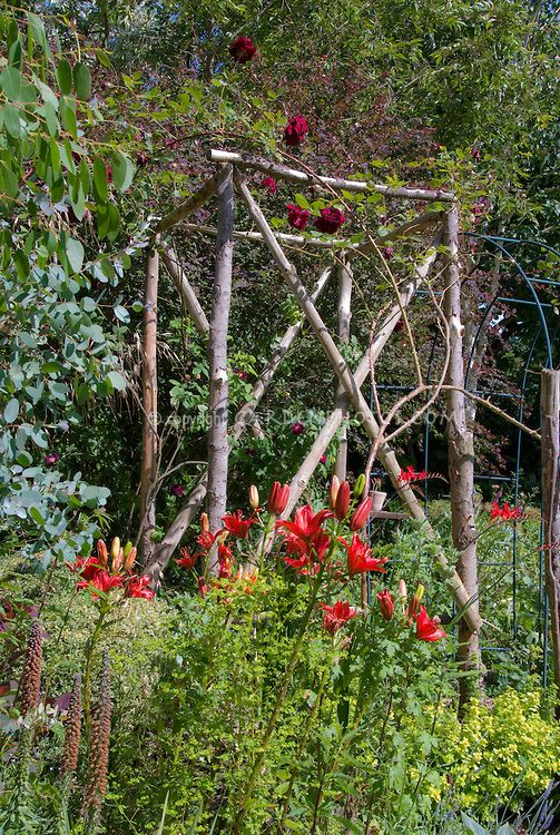 Beautiful Cottage Garden Trellis With Climbing Red Roses Rosa And Lilies Lilium