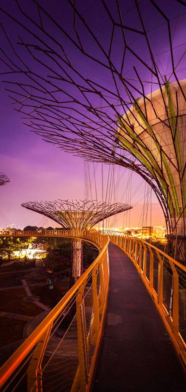 OCBC Skyway in Supertree Grove and Gardens by The Bay, Singapore