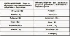 """COMO FAZER CULTIVO DE CANNABIS PASSO A PASSO """"MACONHA"""": CARÊNCIAS - EXCESSOS"""