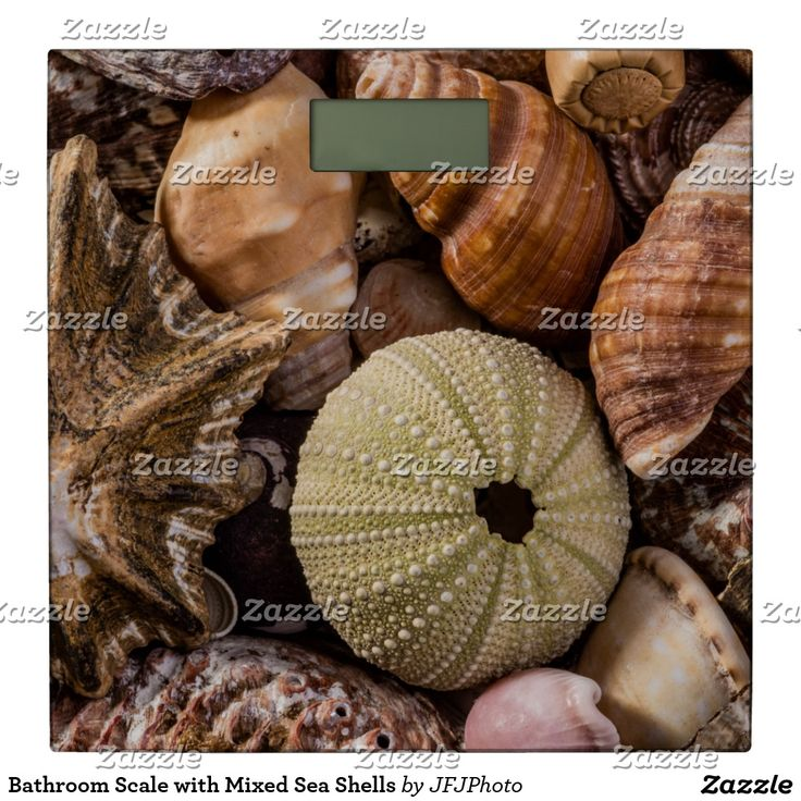 Bathroom Scale with Mixed Sea Shells