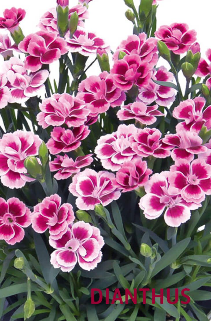 20 best beautiful fragrant flowers in the world fragrant