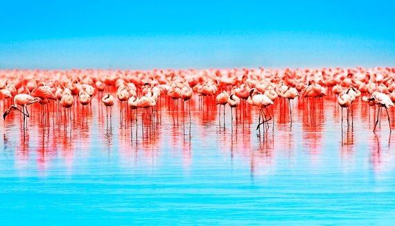 Pink flamingos wall art art print impresión por Chachaprints