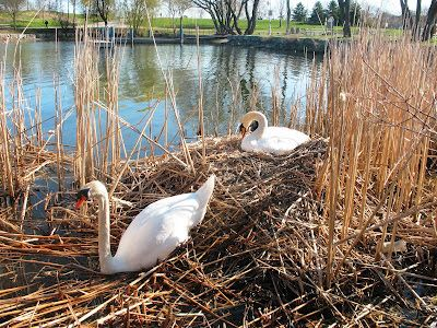 Local blogger Cam for Dundas Valley Outdoors features the Bayfront Park in his family adventure. Great information about the park and suggestions of how to best enjoy it!