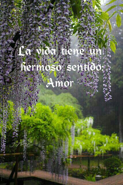 La vida tiene un hermoso sentido el amor.
