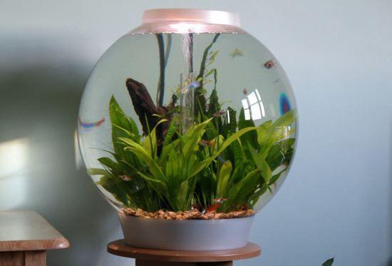 Заказать круглый аквариум под ключ в Москве от компании Подводный мир