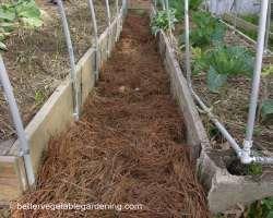 Photo of pine-straw-mulch-path-needles