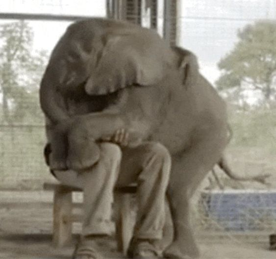 Baby Elephant Is Completely Obsessed With Her Rescuer - The Dodo