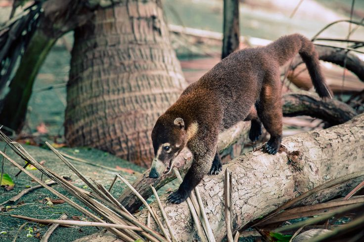 Ein Abenteuer in Costa Rica`s Corcovado Nationalpark via @travelhackers_