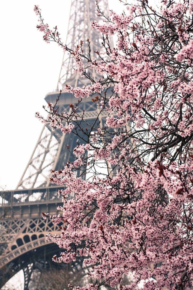 Paris Photography - Paris In The Springtime - Pink Cherry Blossoms Eiffel Tower… 8X10 Fine Art Photograph - Paris Home Decor - Blush Pink. $30.00, Via Etsy.