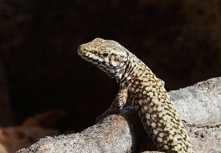 Lizard | by Kjersti Nybakke