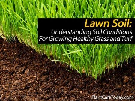 lawn-soil-031514