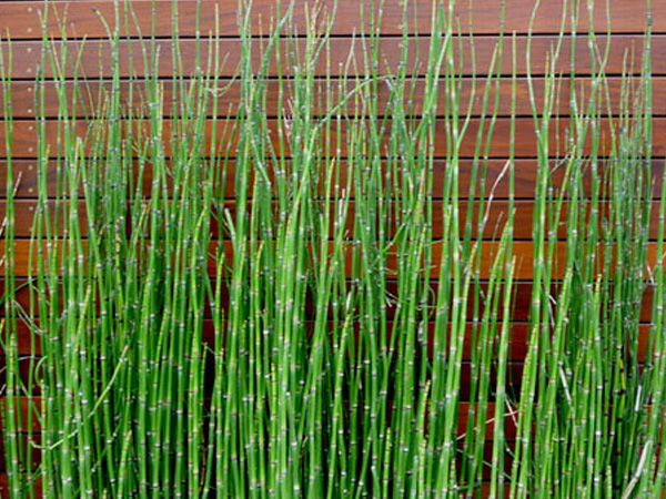 Pin On Plants 2