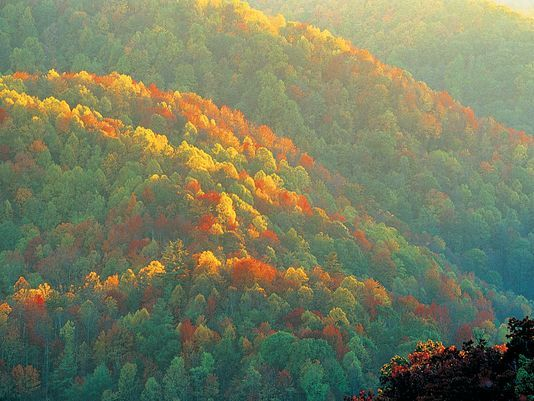 Check out these places in TN to see some fall foliage.