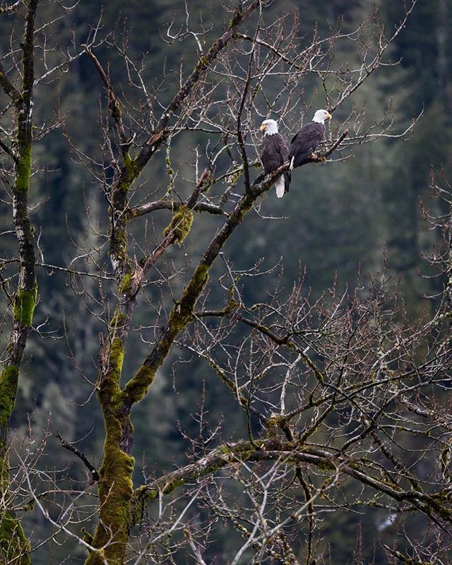 Love seeing these guys hanging out in the trees! They can be very skittish around here though. Not easy to get closer.