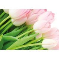 8-018VE XXL - Icke-Vävd / Non-Woven Fototapet Rose Tulips