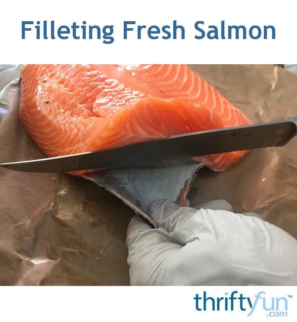 Filleting Fresh Salmon Fillet Salmon Salmon Fish