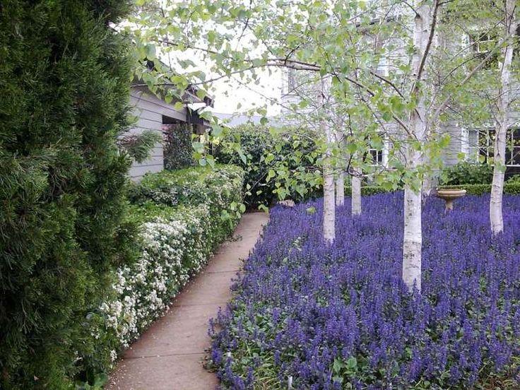 plantes d'ombres bugle de Genève pour le jardin