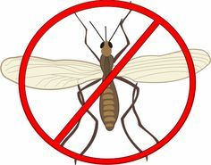 List of Top 30+ Methods to Get Rid Of Gnats in House Kitchen and Outdoors.