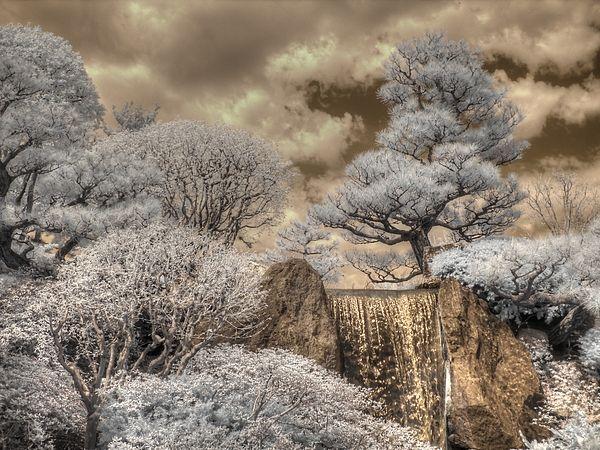 #infrared #photography #ir #irphotography #infraredphotography #mobot #stl #stlart