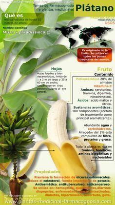 Propiedades del plátano. Infografía. Resumen de las características generales del plátano. Usos medicinales más comunes, propiedades y beneficios de plátano.