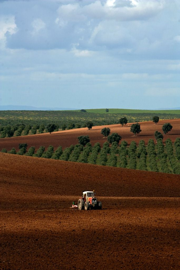 Campos de cultivo en el Alentejo, Portugal