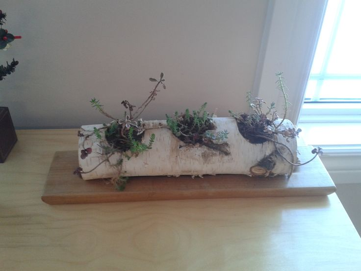 Madison Montessori Academy- Three holes drilled into a birch log, then filled with succulents.
