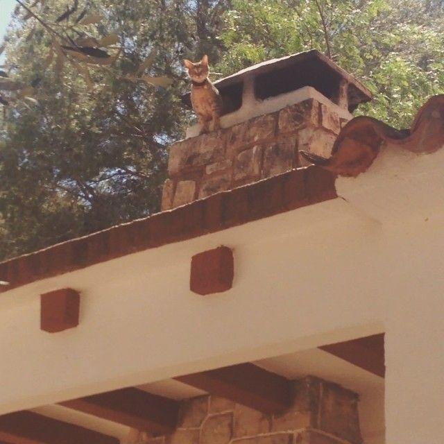 #brian llora. No sabe bajar del tejado!!