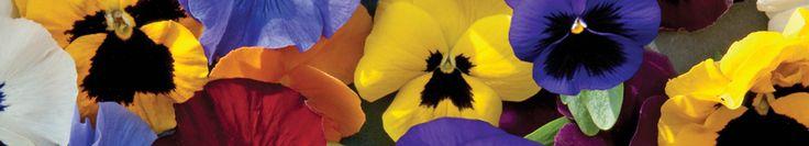 Guide des fleurs comestibles