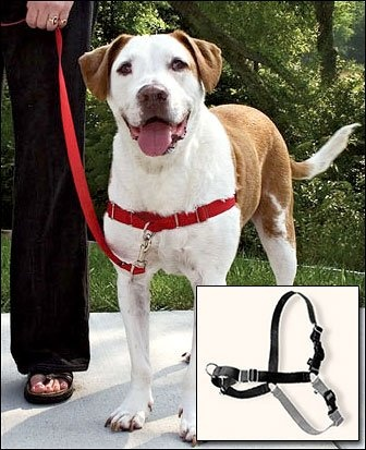$19.67-$22.99 Easy Walk Harness - Petite, Red - Introducing the latest innovation in pulling prevention the Gentle Leader Easy Walk Harness. Designed to gently discourage your dog from pulling while walking on a leash, the Easy Walk Harness is so simple easy to fit, and easy to use. Dogs AND owners love it! Unlike traditional collars, the Gentle Leader Easy Walk Harness never causes coughing, gag ...