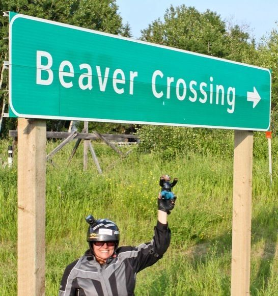 Sample Beaver Shot: Road Trip Rita at the Beaver Crossing near Cold Lake AB