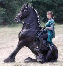 """Képtalálat a következőre: """"fríz ló"""""""