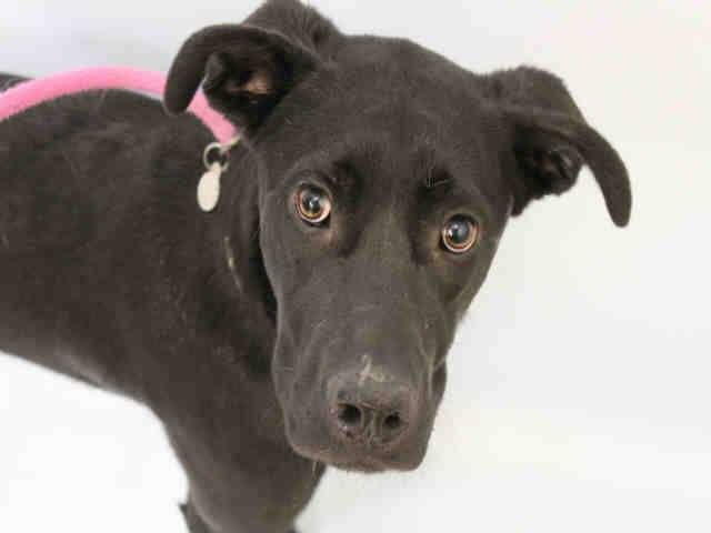 Adopt A Pet In Colorado Springs Humane Society Of The Pikes Peak Region Humane Society Pets Adoption
