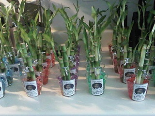 Lucky bamboo party favors for Liam's Baptism