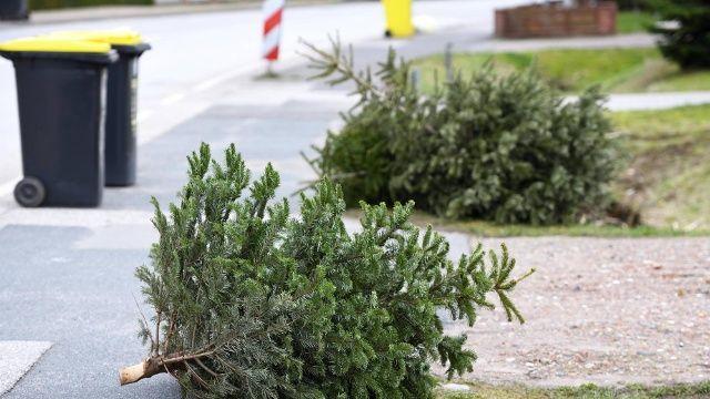 Weihnachten Ist Vorbei Viele Tannen Haben Deshalb Ausgedient Wohin Mit Den Weihnachtsbaumen In Hagen Gibt Es Mehrere Mogl Weihnachten Weihnachtsbaum Tannen