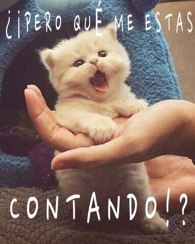gato que habla