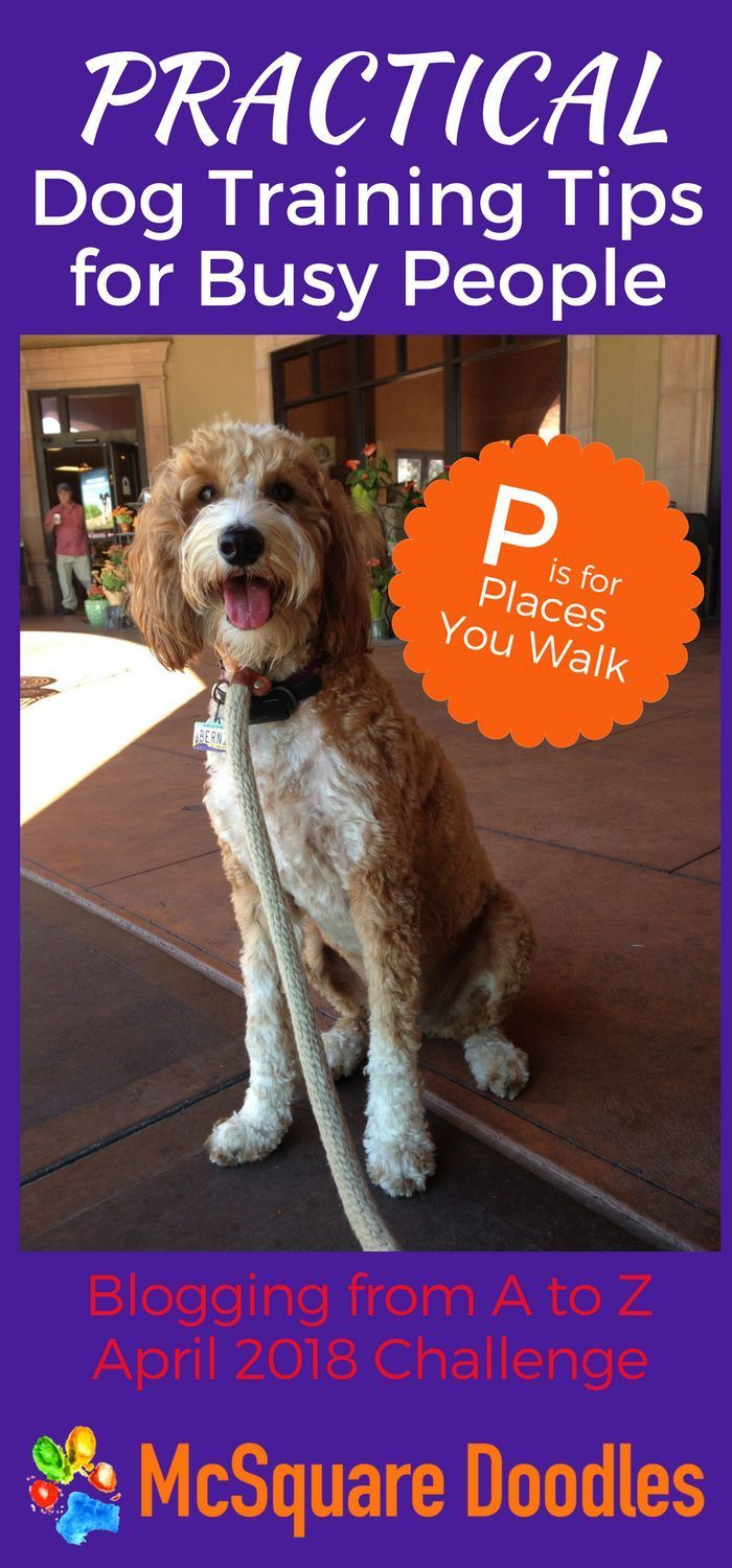 Practical Dog Training Tips For Busy People P Is For Places You