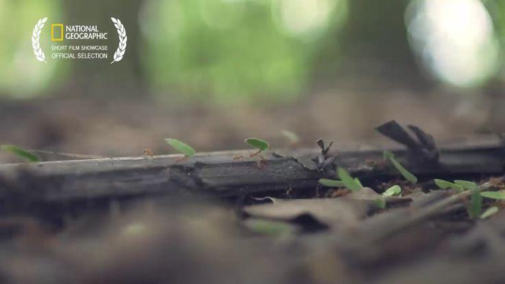"Experience Costa Rica's ""Pura Vida"" in this stunning short film."