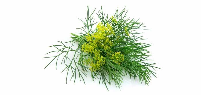 PreviousNext4 of 4 Other uses: Fennel is a very rich source ofpotassium, which is an essential nutrient in our bodies. One of the attributes of potassium in our diet